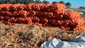 El empaque de cebolla con destino a Brasil comienza a fines de febrero