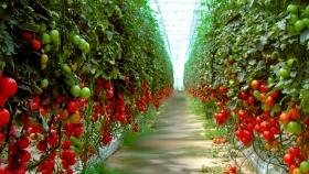 Protegiendo los cultivos bajo invernadero
