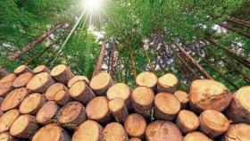 ConFIAr: una nueva institución formada por entidades de la industria forestal