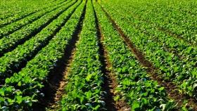 El Departamento de Agricultura de EE.UU. ve más soja en Brasil y Argentina