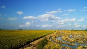 Destacan la importancia del agua subterránea y el impacto en el manejo de los sistemas productivos