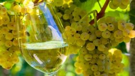Fiesta del Vino en Salta: una experiencia a dos mil metros de altura