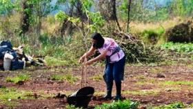 Yacyretá avanza con el proyecto Memoria de los Árboles en Posadas