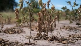 Entre Ríos: solicitan la emergencia agropecuaria en tres departamentos