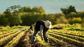 Inaugurarán en Castelli la sexta Colonia Agroecológica de la Argentina con 15 familias productoras