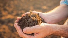 Suelos vivos: un recurso clave para la sustentabilidad de la agricultura de las Américas