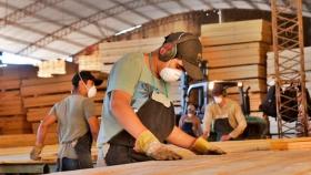 Construcción y demanda de madera activaron más al NEA