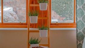 Tips a tener en cuenta para armar un jardín de interior