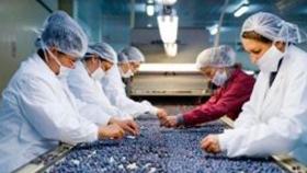 Para EEUU la importación de arándanos de Argentina no amenaza a su producción