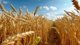 El nuevo grano desarrollado en laboratorio es patrocinado por multinacionales