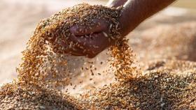 Ganancias: el agro tendría una mayor presión impositiva