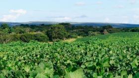 ¿Es posible hacer soja responsable? ?Hoy cada vez más empresas requieren que se produzca en suelos no deforestados