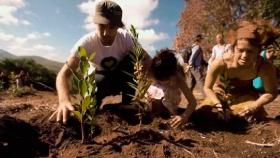 Plantación masiva de árboles, ¿es la solución al cambio climático?