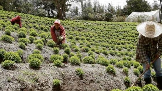 Expertos reclaman tecnologías adaptadas a la agricultura en América