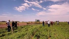 Siembras en verde sobre cultivos de servicios