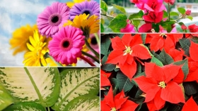 Para los amantes del Jardín: Si te regalaron esta planta mirá cómo tenés que cuidarla