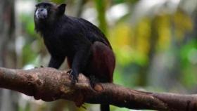 Los sonidos de la fauna, herramienta clave para monitorear la biodiversidad