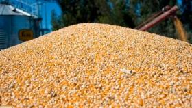 Explosión comercial del maíz: récord de exportaciones y de ventas anticipadas para el ciclo 2020/21