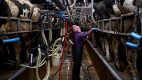 Guerra entre grandes productores de leche en Chile por presunta competencia desleal