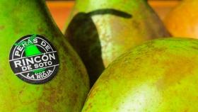 Primeros resultados de la investigación de la pera de Rincón de Soto
