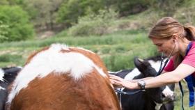 Prácticas veterinarias en explotaciones ganaderas durante la COVID-19