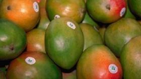 El mango aumentó su comercialización en Argentina en los últimos 5 años