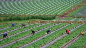 CASFEG y APAMA unidas para desarrollar nuevas variedades de arándanos entrerrianos