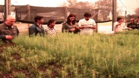 Tecnicatura Universitaria en Viveros y Plantaciones Forestales