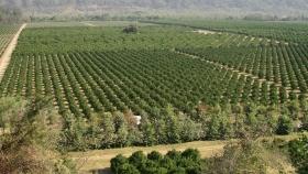 Ledesma busca triplicar las exportaciones de limones a los Estados Unidos