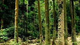 El pago por servicios ambientales en el centro del debate