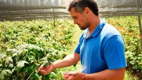 Fruticultura de excepción: Yuco, la finca que produce frambuesas y zarzamoras agroecológicas desde Córdoba