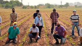 Avanzan en la producción de tabaco con altos estándares de sustentabilidad medioambiental