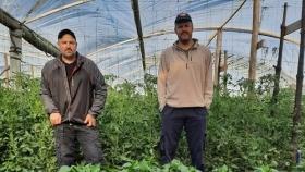 Hidroponia: usan piedras volcánicas de Neuquén para producir frutas y verduras