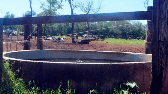 Agua para vacas lecheras
