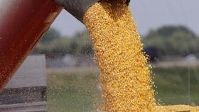 Maíz: las lluvias fortalecieron los planteos tardíos y la cosecha recupera un millón de toneladas