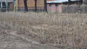 Buscan ampliar la matriz productiva de Malargüe con plantación de álamos