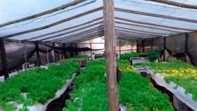 Hidroponía, un sistema de cultivo que garantiza verduras frescas aún en tiempos de emergencia