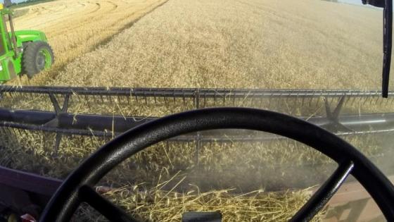 Cuánto impactaría una suba de retenciones de trigo y maiz