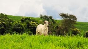 Brasil: Marfrig apuesta por la agricultura regenerativa