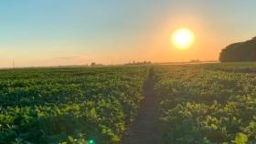 Guardianes de la tierra, exitosa experiencia que redujo el uso de agroquímicos