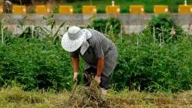 La FAO urge a transformar los sistemas alimentarios en América Latina