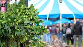 El lúpulo es la pimienta distintiva que buscan los cerveceros artesanales