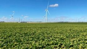 La campaña de remolacha en Europa se ve amenazada por serios problemas de sanidad vegetal