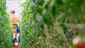 El supermercado canadiense que cultiva las verduras y frutas que vende en su techo