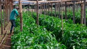 20 millones de pesos en créditos para producciones agropecuarias de Neuquén