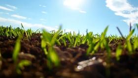 Sin Diversidad no hay sostenibilidad en los sistemas biológicos, productivos o económicos