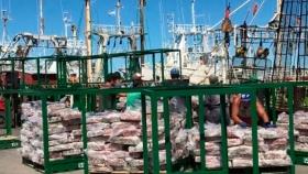 Pesca de calamar: apuntalan la política de mayor empleo en tierra