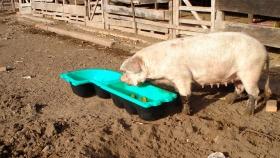 Comederos y bebederos para porcinos y ovinos de Feed Plast