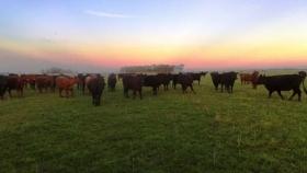 Efecto invernadero: un estudio abordó la incidencia de la ganadería