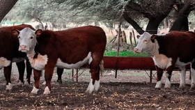 Es un excelente momento para la ganadería dijo Carlos Gaccio